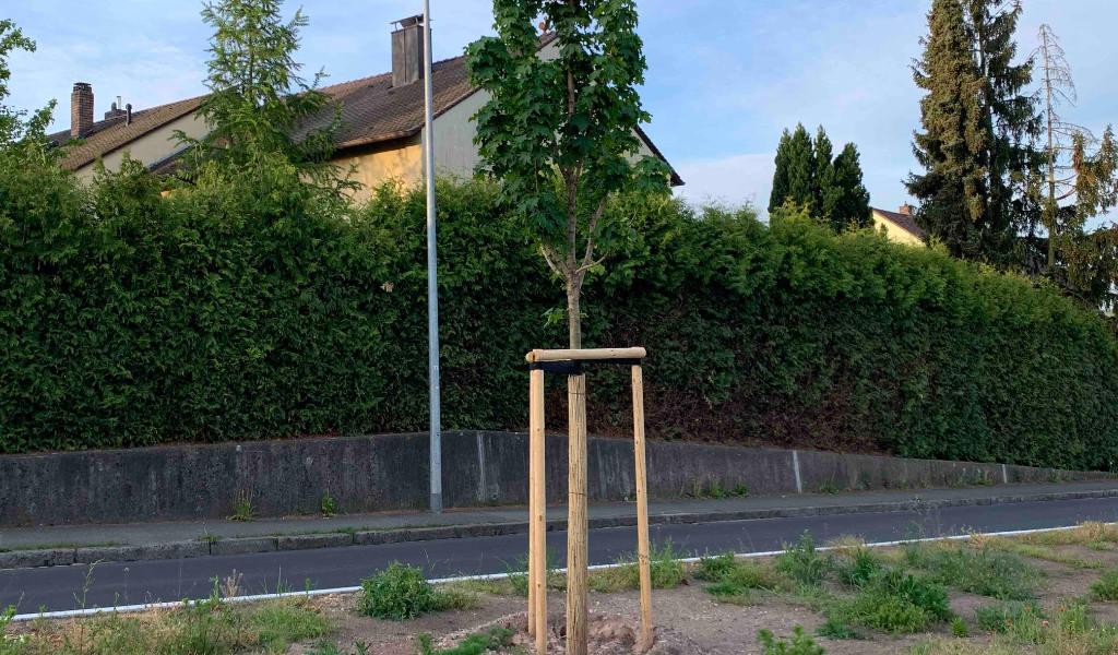 ersatzpflanzung_nürnberg